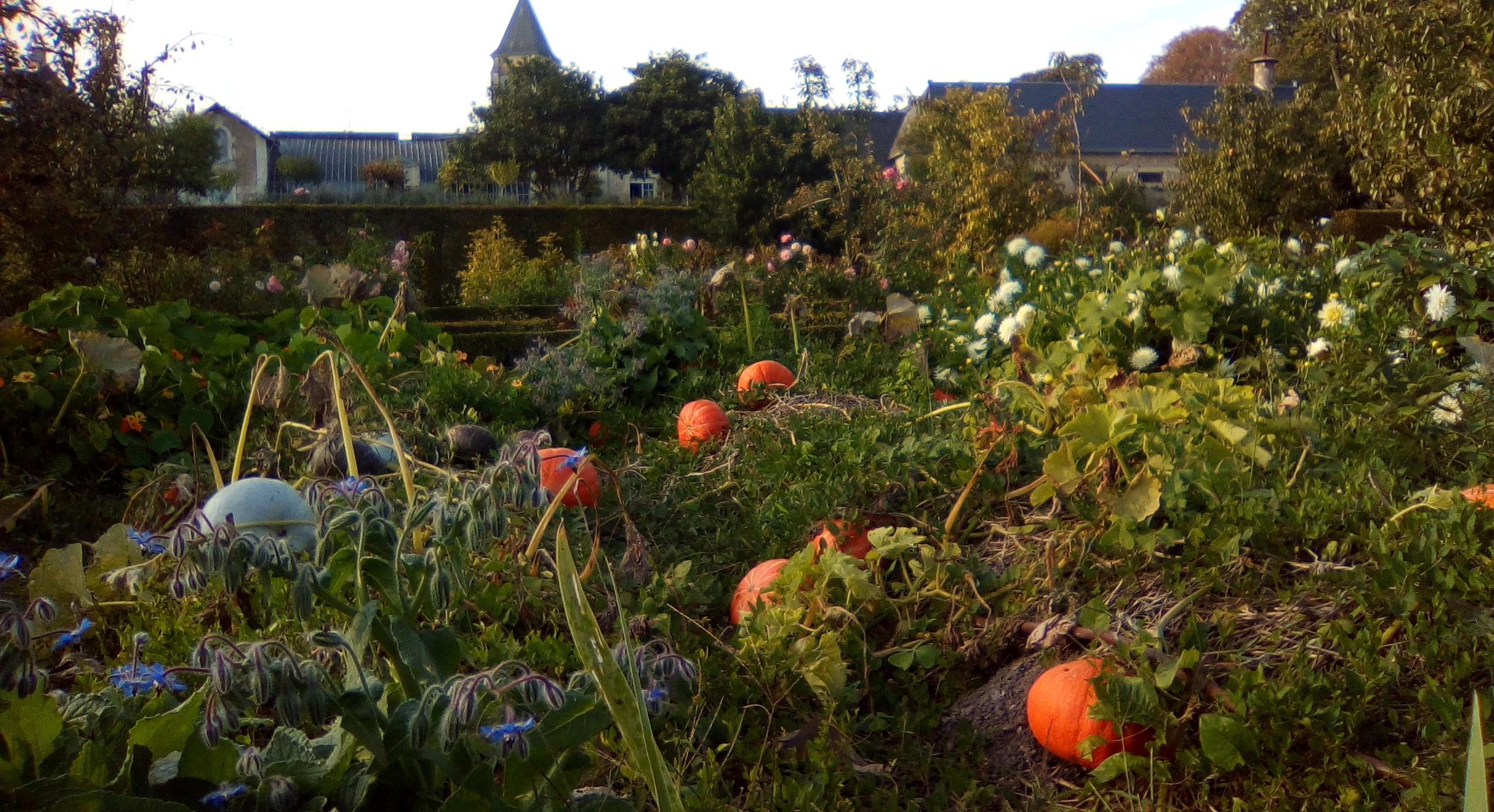 All Saints\' Holidays: Autumnal walk at the Château - Château du Lude